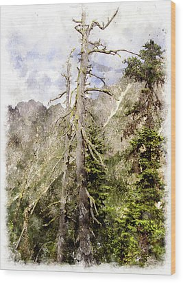 Old Pines Cascades Wc Wood Print by Peter J Sucy