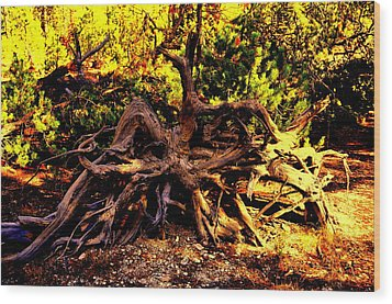 Old Roots Wood Print by Aron Chervin