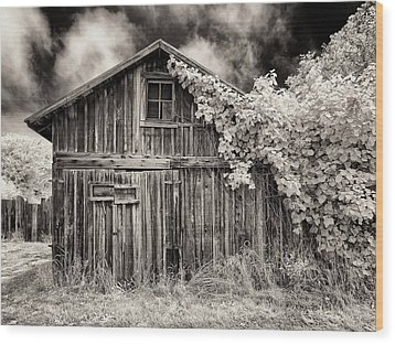 Old Shed In Sepia Wood Print by Greg Nyquist