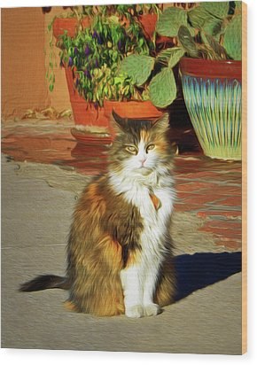 Wood Print featuring the photograph Old Town Cat by Nikolyn McDonald