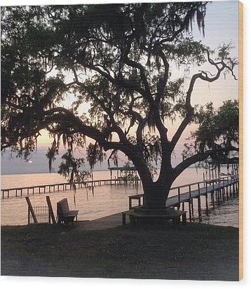 Old Tree At The Dock Wood Print by Christin Brodie