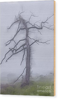 Old Tree In Fog In The Blue Ridge Ap Wood Print