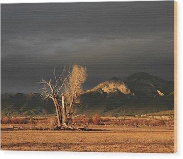 Sunset On The Old Cottonwood Wood Print