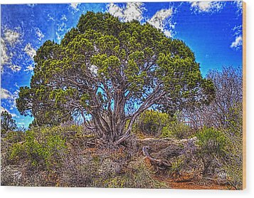 Old Utah Juniper Wood Print