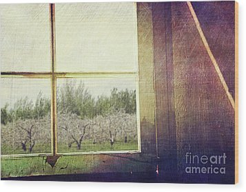 Old Window Looking Out To Apple Orchard Wood Print by Sandra Cunningham