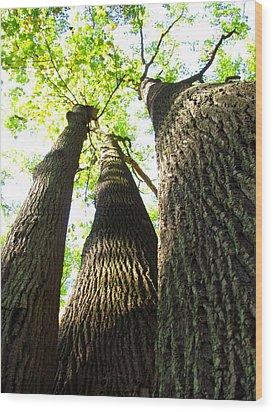 Oldgrowth Tulip Tree Wood Print