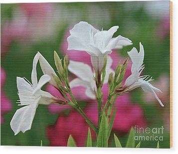 Wood Print featuring the photograph Oleander Casablanca 1 by Wilhelm Hufnagl