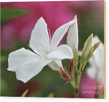Wood Print featuring the photograph Oleander Casablanca 2 by Wilhelm Hufnagl