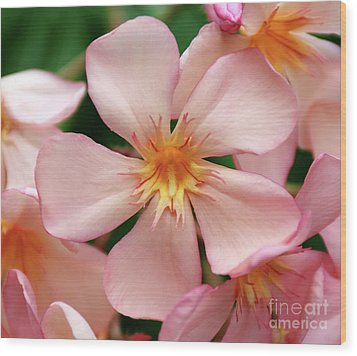 Wood Print featuring the photograph Oleander Dr. Ragioneri 1 by Wilhelm Hufnagl
