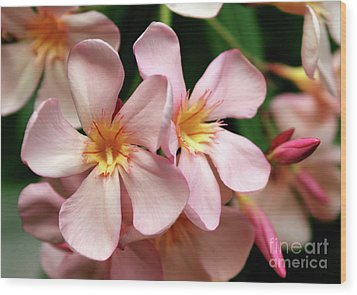 Wood Print featuring the photograph Oleander Dr. Ragioneri 2 by Wilhelm Hufnagl