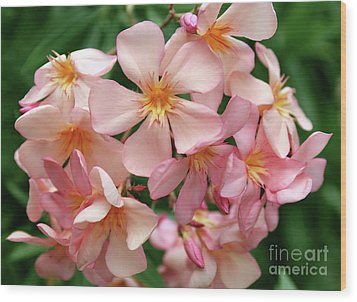 Wood Print featuring the photograph Oleander Dr. Ragioneri 3 by Wilhelm Hufnagl