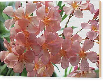 Wood Print featuring the photograph Oleander Dr. Ragioneri 4 by Wilhelm Hufnagl
