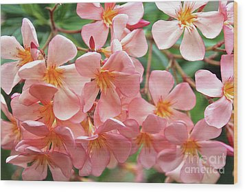 Wood Print featuring the photograph Oleander Dr. Ragioneri 5 by Wilhelm Hufnagl