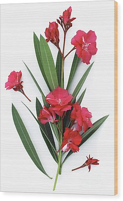 Wood Print featuring the photograph Oleander Geant Des Batailles 2 by Wilhelm Hufnagl