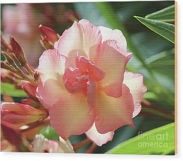 Wood Print featuring the photograph Oleander Mrs. Roeding 1 by Wilhelm Hufnagl