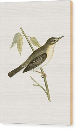 Olivaceous Warbler Wood Print by English School
