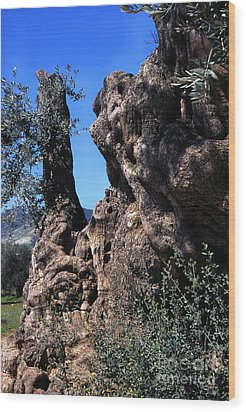 Olive Tree 2000 Years Old Wood Print by Thomas R Fletcher