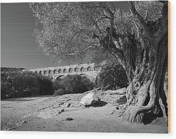 Olive Tree And Pont Du Gard, France Wood Print by Richard Goodrich