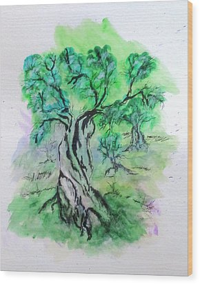 Olive Tree Grove Wood Print by Clyde J Kell