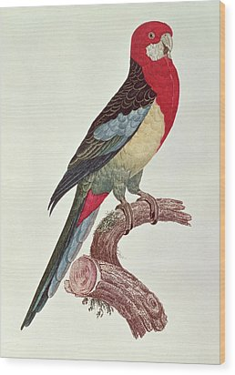 Omnicolored Parakeet Wood Print by Jacques Barraband