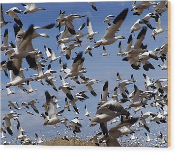 On A Mission Bosque Del Apache Wood Print by Kurt Van Wagner