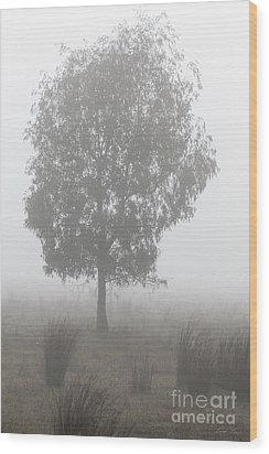 Wood Print featuring the photograph On A Winter's Morning by Linda Lees