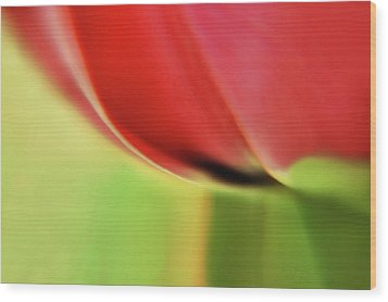 Wood Print featuring the photograph  Tulip's  Edge by Elaine Manley