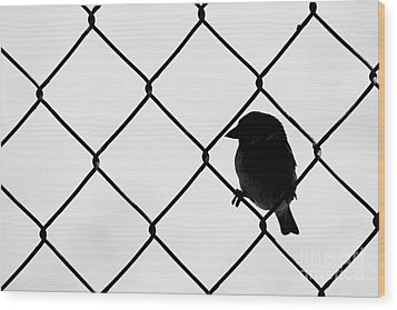 On The Fence Wood Print by Afrodita Ellerman
