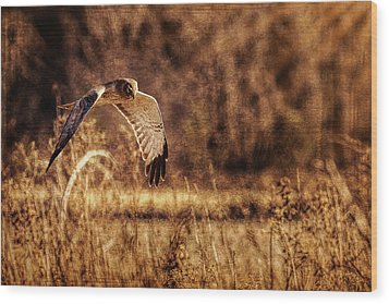 Wood Print featuring the photograph On The Hunt by Annette Hugen