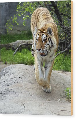On The Prowl Wood Print by Gordon Dean II
