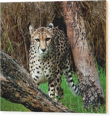 On The Prowl Wood Print by Heather Thorning