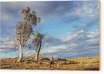 On The Road To Cooma Wood Print