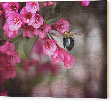 On Wine And Roses Weigela - 2 Wood Print