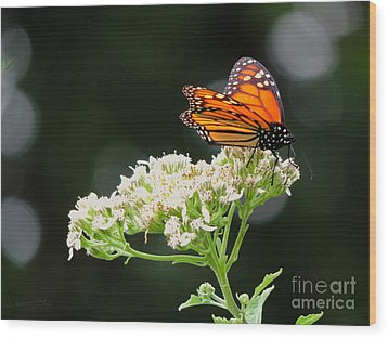 Once Upon A Butterfly 005 Wood Print