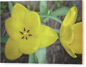 One And A Half Yellow Tulips Wood Print by Michelle Calkins