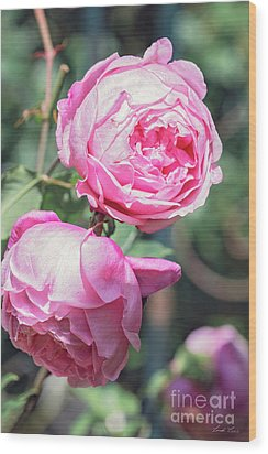 Wood Print featuring the photograph One Bold, One Bashful by Linda Lees