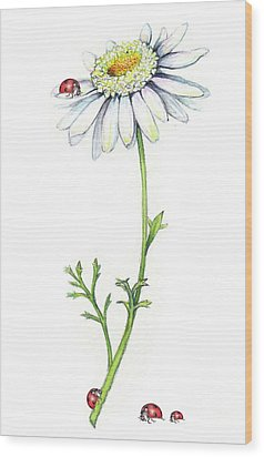 Wood Print featuring the painting One Daisy And Four Ladybugs by Heidi Kriel