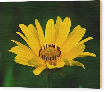 One Daisy Wood Print by Juergen Roth