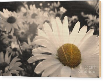 One Daisy Stands Out From The Bunch Wood Print