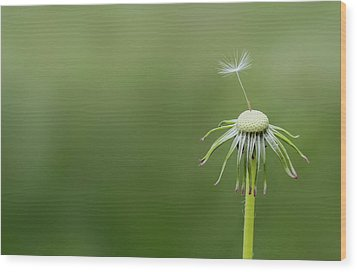Wood Print featuring the photograph One Dandy by Bess Hamiti