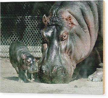 One Day Old Baby Hippo And Mom Wood Print