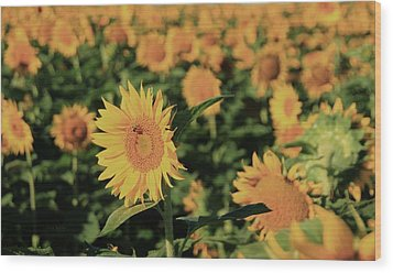 Wood Print featuring the photograph One In A Million Sunflowers by Chris Berry