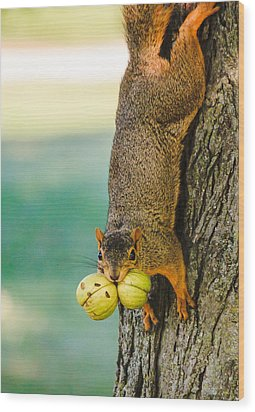 One Nut Is Never Enough Wood Print by Joni Eskridge