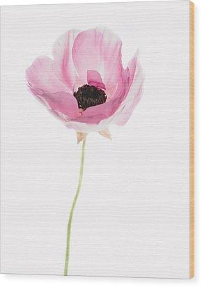 One Pink Beauty Wood Print by Rebecca Cozart