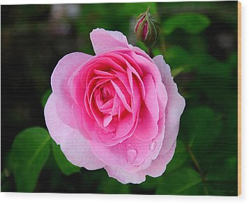 One Pink Rose And One Bud Wood Print