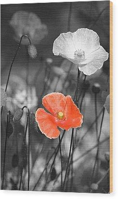 One Red Poppy Wood Print by Bonnie Bruno