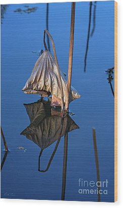 Wood Print featuring the photograph Only In Still Water by Linda Lees