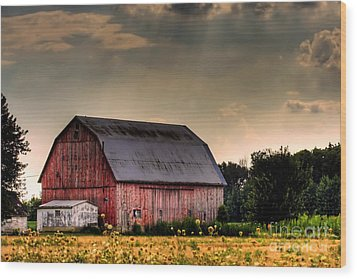 Ontario Barn In The Sun Wood Print by Tim Wilson
