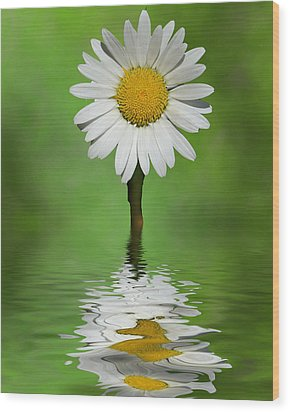 Wood Print featuring the photograph Oops Za Daisy by Rick Friedle