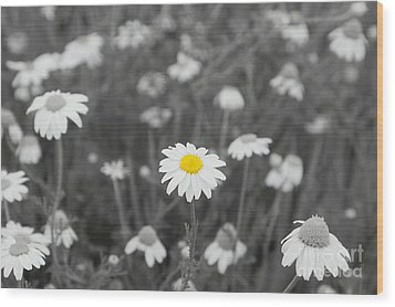 Wood Print featuring the photograph Oopsy Daisy by Benanne Stiens